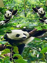 Постельное белье ТомДом Бамбуковый рай рай
